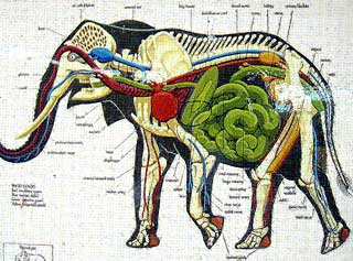 Elephant Anatomy Images - Frompo